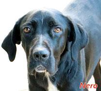 Nero Sardinienhunde