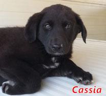 Cassia - geb. 11/2020
