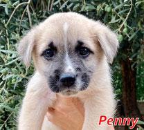 Penny - Region Lanusei - geb. ca. 08/2021