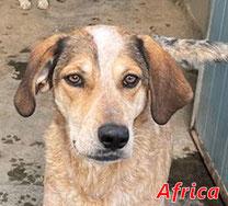 Africa - Region Lanusei - geb. ca. 03/2020