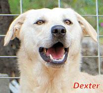 Dexter - Region Lanusei - geb. ca. 03/2021