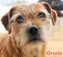 Orsola - geb. 01/2014