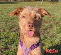 Fido - geb. 11/2018