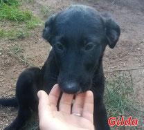 Gilda (f) - Arca Sarda - geb. 08/2020