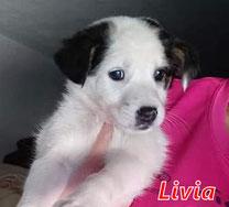 Livia - Region Lanusei - geb. 08/2020