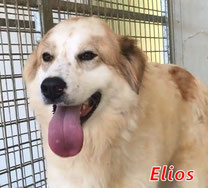 Elios - Region Lanusei - geb. ca. 08/2020