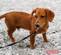 Silvio - geb. 05/2019