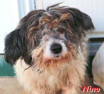 Nino - geb. 01/2009