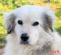 Jack (m) - Arca Sarda - geb. 11/2013