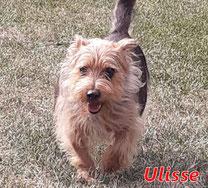 Ulisse - geb.  01/2014