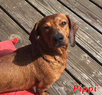Pippi - geb. 01/2019