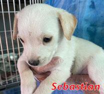 Sebastian - geb. 08/2021