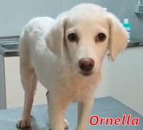 Ornella - 09/2020