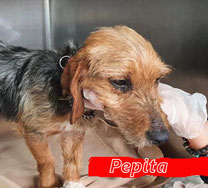 Pepita - geb. 01/2020