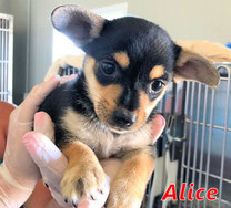 Alice - geb. 04/2021