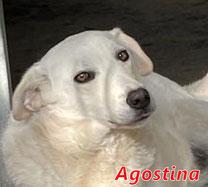 Agostina - Reg. Lanusei - geb. ca. 08/2020