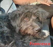 Francesca - geb. 09/2020