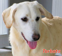 Torbata - Region Lanusei - geb. 08/2021