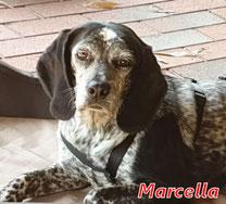 Marcella - geb. 01/2015