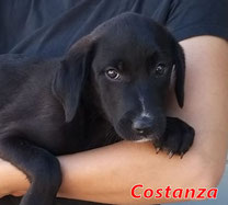 Costanza - geb. 01/2021