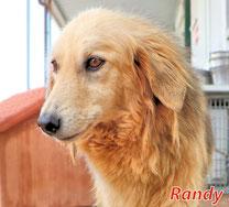 Randy - geb. 02/2012