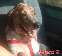 Vasco 2 - Region Lanusei - geb. 02/2020