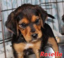 Rosella - geb. ca. 01/2020