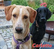 Carletto - geb. 08/2020