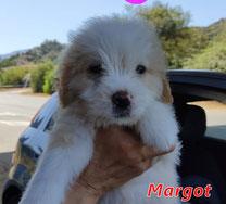 Margot - Region Lanusei - geb. ca. 04/2021