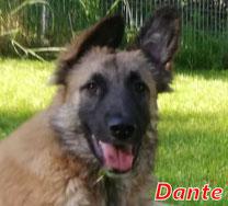 Dante - Region Lanusei - geb. ca. 01/2020