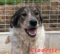 Clodette - Reg. Lanusei - geb. 03/2021
