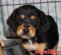 Rosellina - geb. 01/2020