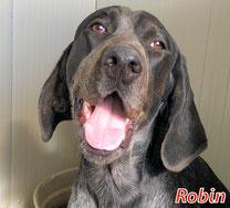 Robin (8 Welpen) - geb. ca. 06/2021