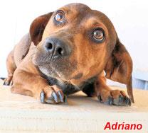 Adriano - geb. 01/2017