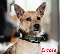 Ercole - geb. 03/2018