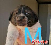 Bruno - Region Lanusei - geb. ca. 03/2021