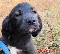 Duchessa - Region Lanusei - geb. 04/2021