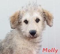 Molly - geb. 02/2020