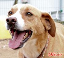 Oliver (m) - Arca Sarda - geb. 03/2013