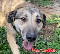 Vespolina - Region Lanusei - geb. 08/2021