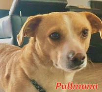 Pullman - Region Lanusei - geb.ca.07/2018