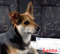 Santo - Region Lanusei - geb. 06/2017