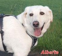 Alberto - geb.  06/2016
