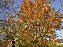 Herbstferien in Bayern
