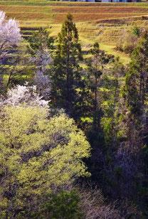 美しき山里中津川花々を訪ねて芽吹き新緑福岡大橋から八布施を望む田瀬下野付知加子母恵那
