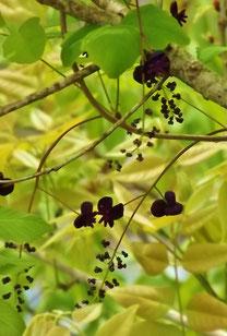 美しき山里中津川花々を訪ねて芽吹き新緑付知川福岡大橋から望む