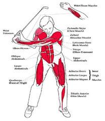 Golf Muskulatur Fitness up to yo, Golftraining, Handicap