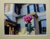 写真 西洋館のバラ 14期 大塚 賢一