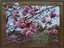 写真 春の宴  12期 逢坂 敏秋