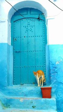 モロッコ旅行/シャウエンのネコ